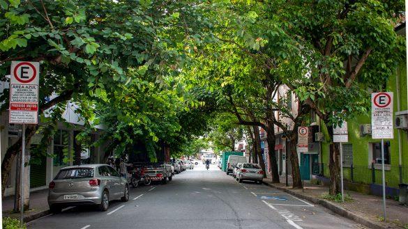 árvores rua curt hering